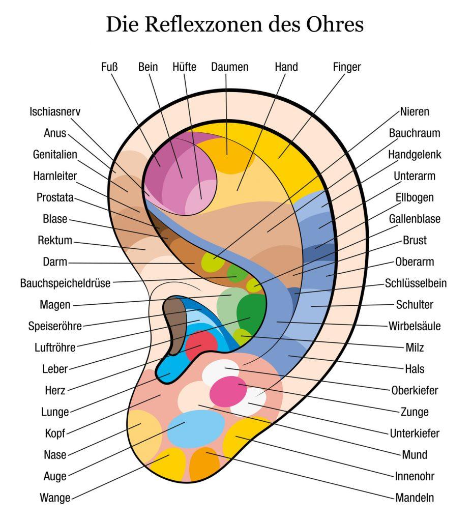 Infografik Akupressur: Die Reflexzonen des Ohres (#02)
