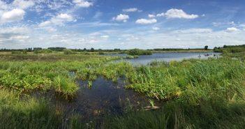 Moorbad Kuren: Das Naturheilmittel Moor